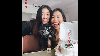 loki the Amazing Cat . Custom Cake for Cake Loki . TikTok