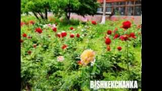 Виктор Павлик (кавер вокал) Город зеленого цвета