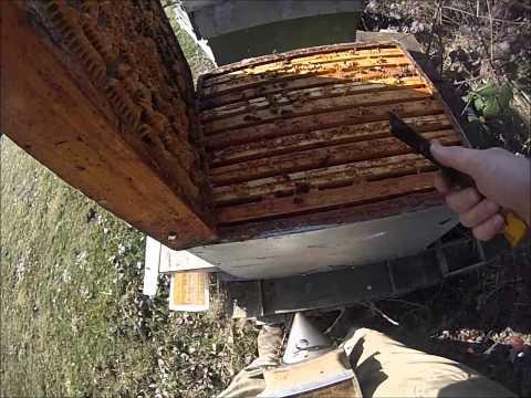 nourrir une ruche avec du candi sur couvre cadre nourrisseur