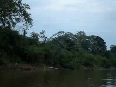 INSIDE THE JUNGLE (UCAYALI RIVER) - YouTube Ucayali River