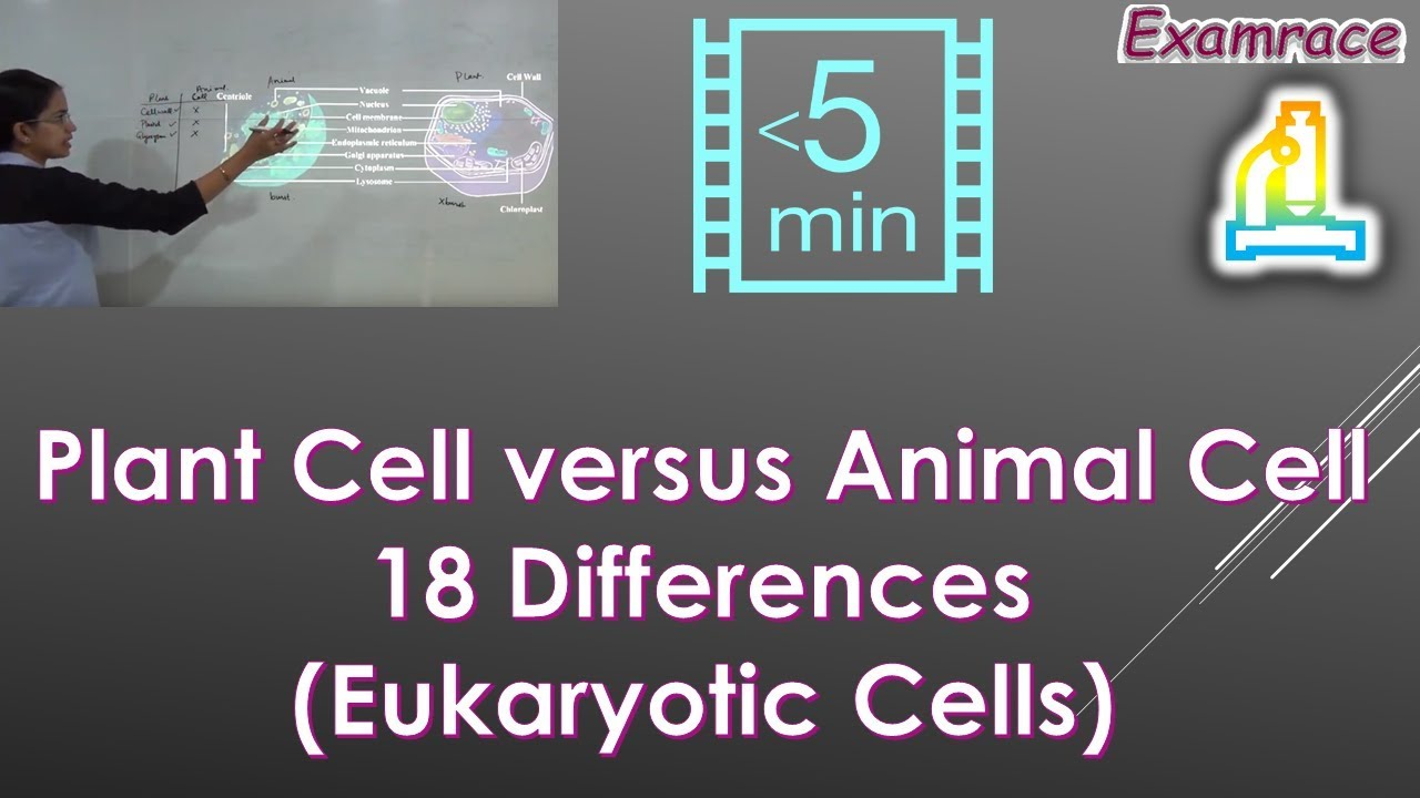 Plant Cell versus Animal Cell: 18 Differences (Eukaryotic ...