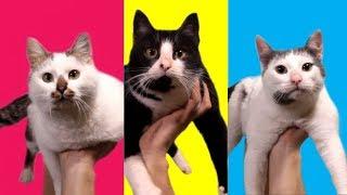 Котофитнес Смешные коты и кошки Лиза и ее любимые котики LizaTube