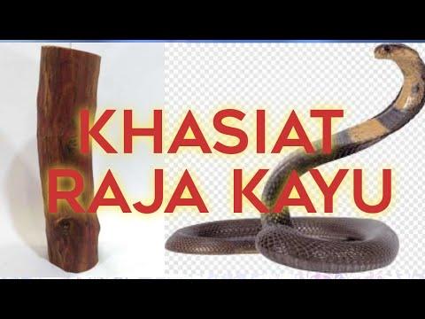 Raja Kayu Youtube