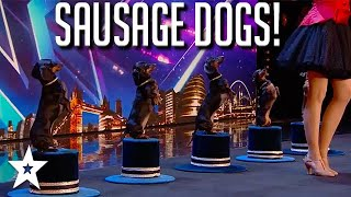 SAUSAGE DOGS EVERYWHERE! CUTE Puppy Tricks on BGT 2020 | Got Talent Global