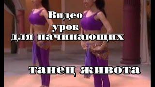 Танец живота для тех, кто хочет научиться . Для начинающих. Видео урок.