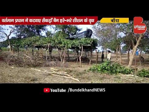 फर्जी गौशाला के लिए काटे हरे-भरे शीशम के वृक्ष | Bundelkhand News