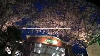 神戸 桜トンネル(★☆歌う有森冴子★☆シアター)