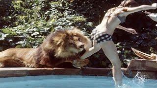 Download Video 150 खतरनाक जानवरों के साथ शूट हुई थी यह फिल्म, 70 लोग हुए थे घायल MP3 3GP MP4