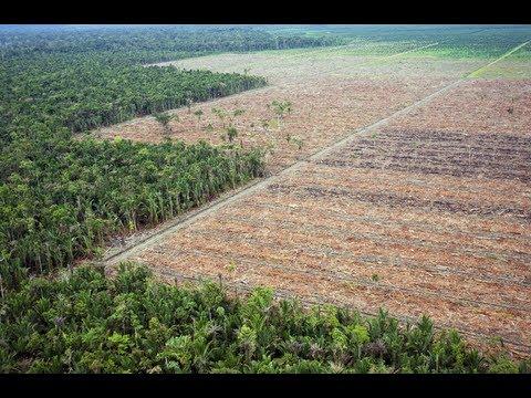 90 de la deforestaci n ocurre debido a cambio de uso de for 4 usos del suelo en colombia