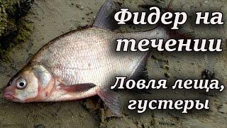 Ловля на фидер - Моя Рыбалка