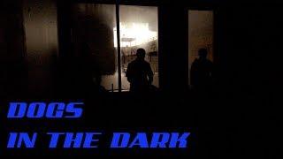 Dogs in the Dark