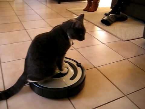 Dexter The Cat Rides The Roomba Youtube