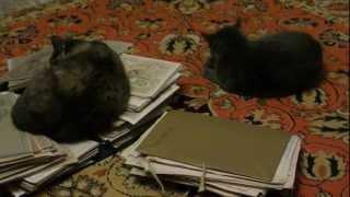 кошки и картины часть 2