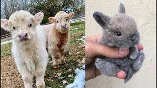 Cute Baby Animals Videos Compilation - Cute moment of the animals
