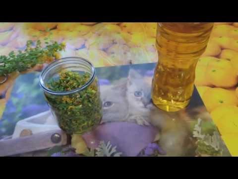 Как приготовить масло зверобоя в домашних условиях из сухой травы