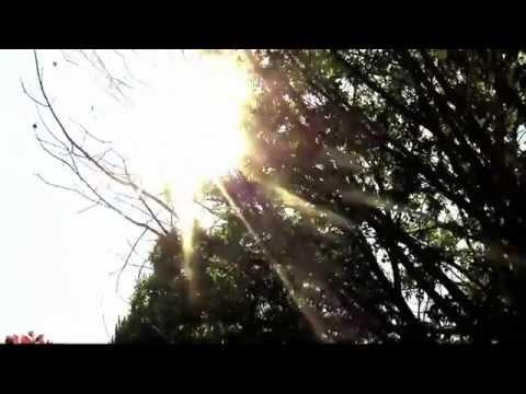 MY OLD WAYS - Dr. Dog (lyrics)