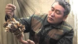 Охота на медведя в берлоге. Выпуск 32. (08.02.10)