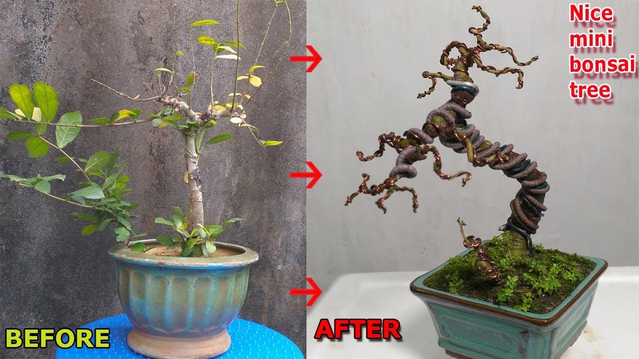 Tạo thế cây bonsai mini đẹp từ cây phôi bình thường | QH 70