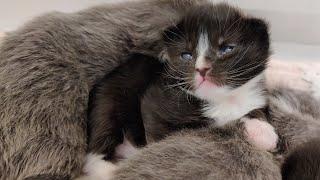 Kittens!  20200923
