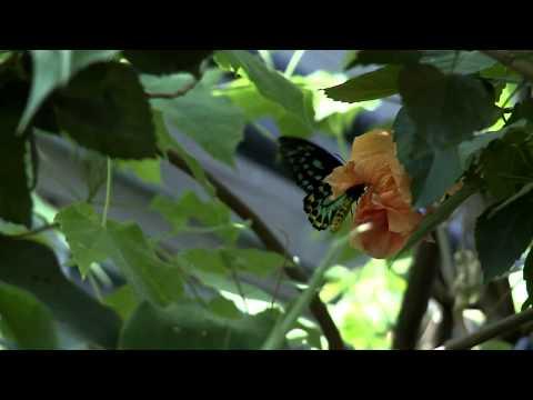 Explore Colorado Denver Butterfly Pavilion