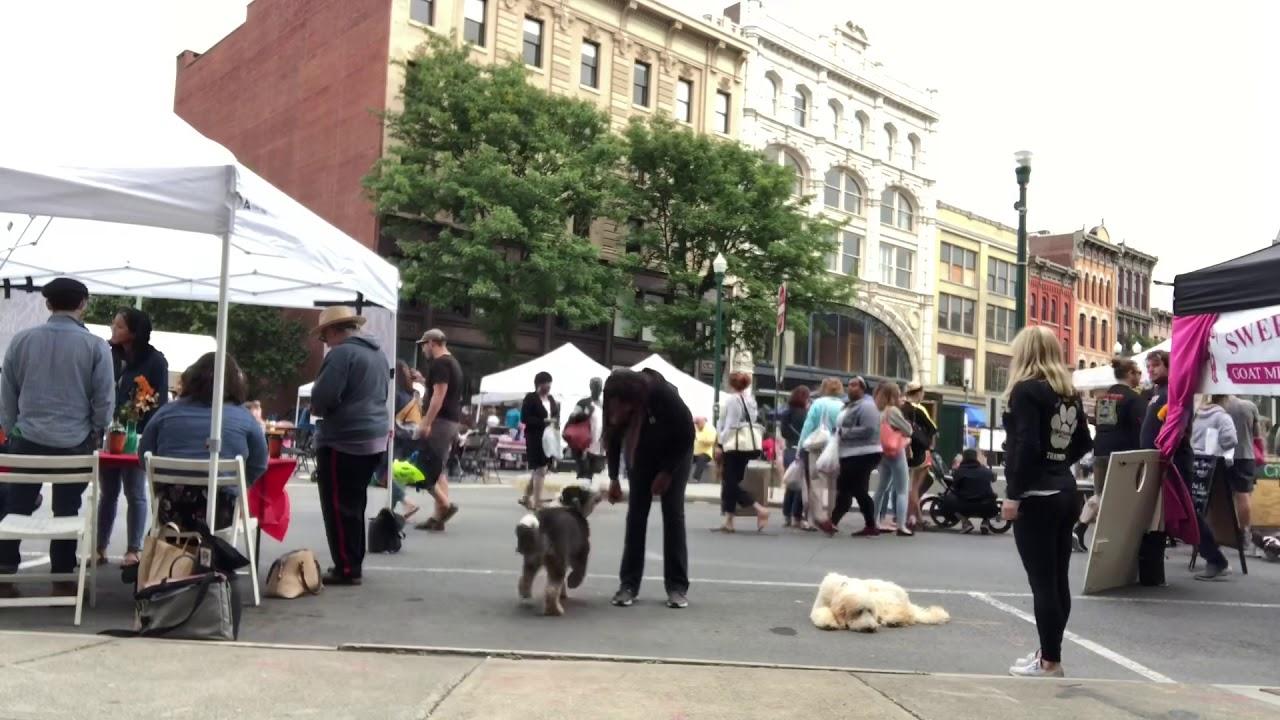 Dog Obedience Trainer Albany NY | Dog Training Albany New