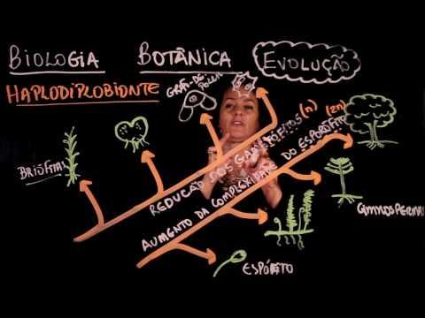 Enem: Aula 84 REINO PLANTAE Botânica Evolução (ProUni)