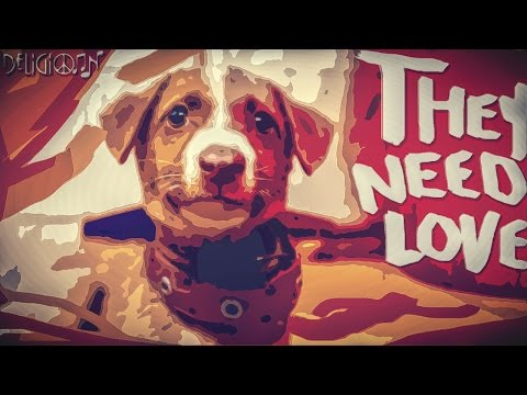 They Need Love - A Short Documentary on Stray Dogs