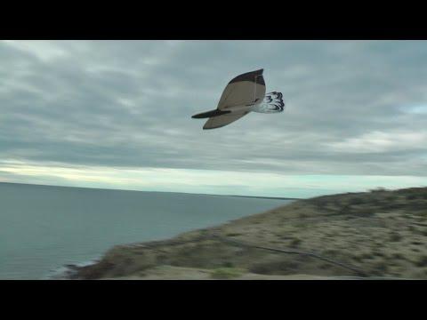 Flying The Alula Trek by Pierre RONDEL