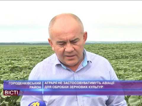 Аграрії не застосовуватимуть авіації для обробки зернових культур