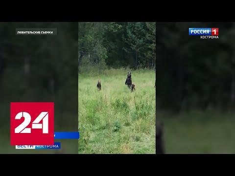 Охотник ловко построил диких медведей Россия 24