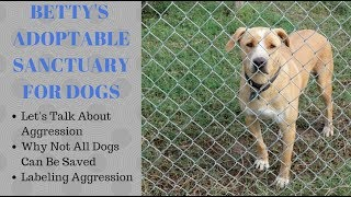 Betty's Adoptable Sanctuary for Dogs: Aggression Explained and Assessment
