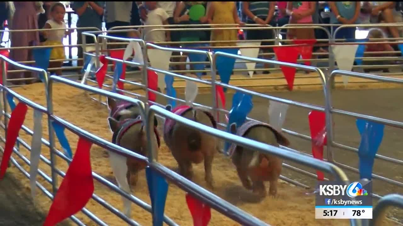 racing-pigs-beef-up-entertainment-at-the-california-mid-state-fair