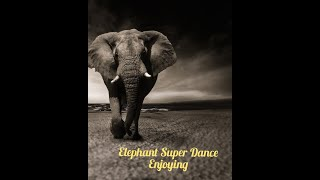 Elephant funny dance