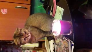 Кошка смотрит на свечку