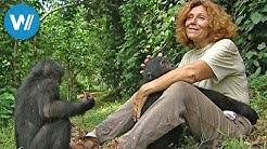 Die Mutter der Bonobos (360° - GEO Reportage)