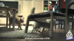 100 chats lâchés dans un Ikea