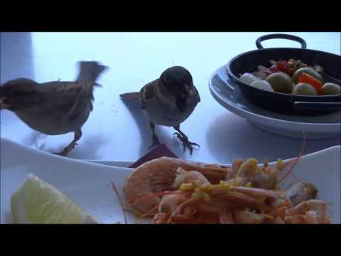 Birds Stealing Paella (Animal Gangsters)