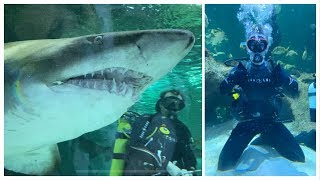 i-went-swimming-with-sharks