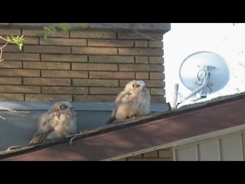 Owl Poops And Flees The Scene