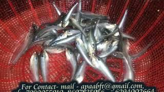 Biofloc Fish Farming In India Cost