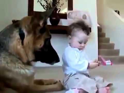 Смешные собаки (55 фото) -