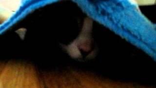 キッチンマットの下に隠れてわくわく顔の仙一くんです。