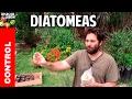 tierra de diatomeas- excelente insecticida organico @cosasdeljardin