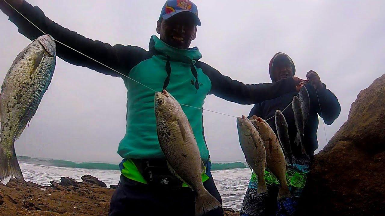 Pesca Sobre Peñas Con Carnada Pulga de Mar / Pesca de Lorna