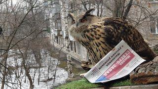 Когда ждёшь письмо из Хогвартса, а приносят газету... и не отдают!