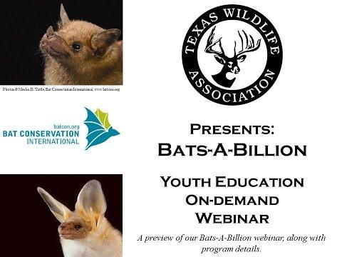 Bats A Billion preview