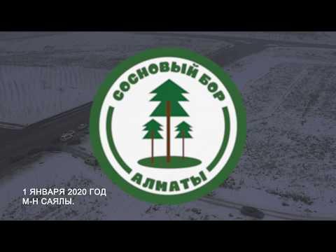 Сосновый Бор Алматы - 1 января2020 - 1й этап высадки.