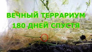 Вечный Террариум - 180 дней спустя