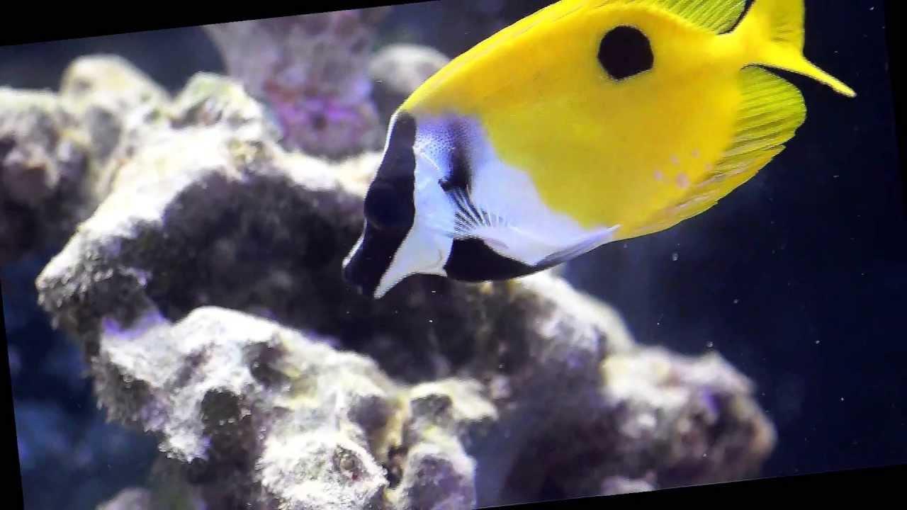 Excellent hair algae remover youtube for Fish tank algae remover