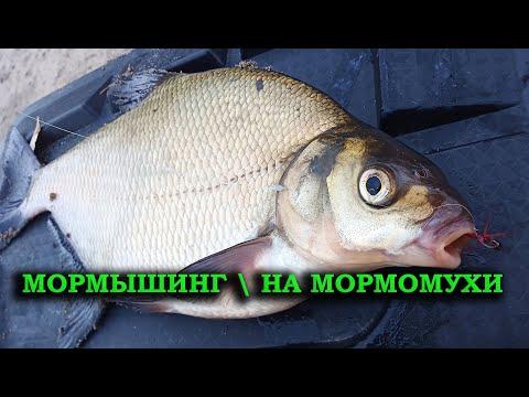 МОРМЫШИНГ. НА МОРМОМУХУ